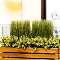 coworkingStationWalpole-plants